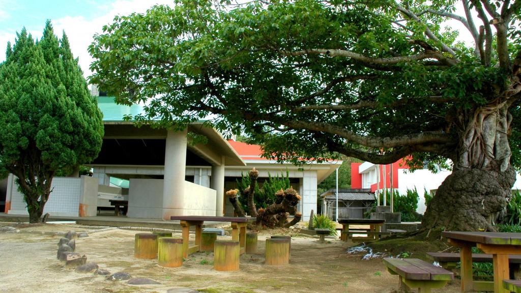島間中学校 校庭の巨木